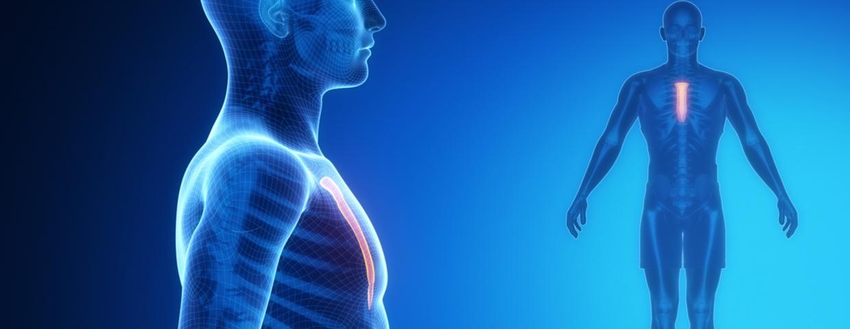 3D image of skeletal man highlighting sternum